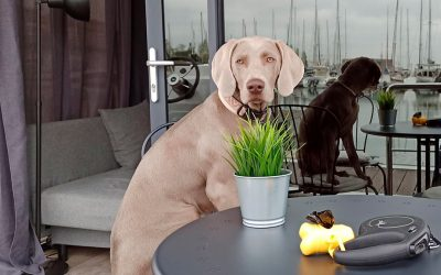 The Homeboat Company. ¡Un hotel Pet-friendly!