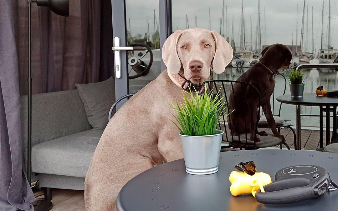 Hotel pet-friendly